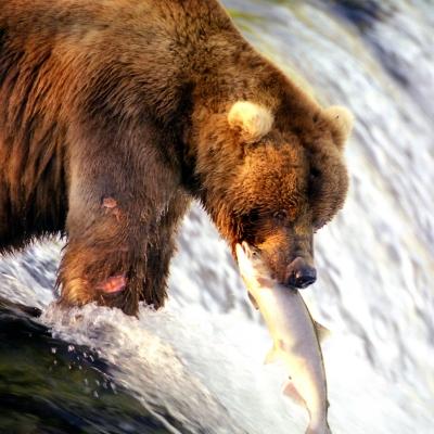 Rondreis Alaska, 21 dagen hotelreis