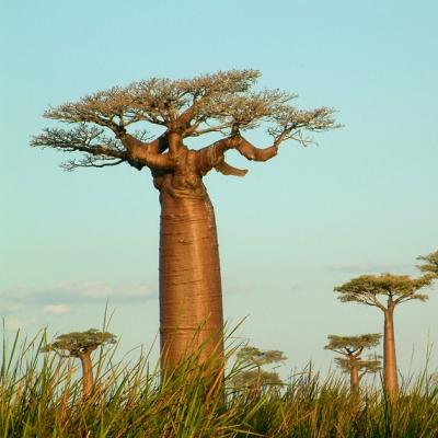 Rondreis Madagascar, 31 dagen